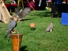 birds-cwwilkinson