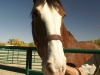 13clydesdale-HeatherMacIver.jpg